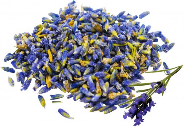 Lavendelblüten blau ganz